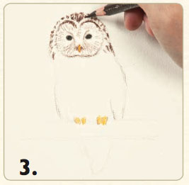 How to draw an owl in colored pencil quarto knows blog for Owl beak drawing