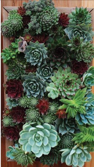 With Just A Few Tools And Materials, You, Too, Can Create A DIY Wall Garden  Perfect For Transforming Small, Drab Spaces Into Personalized Verdant  Retreats.