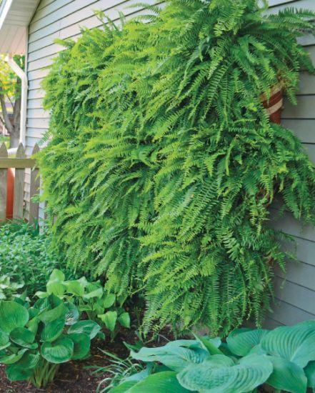 How To Build A Vertical Fern Garden