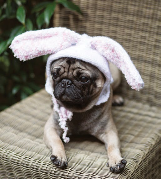 How To Knit Bunny Ears For Your Puppy From Outrageously Adorable Dog