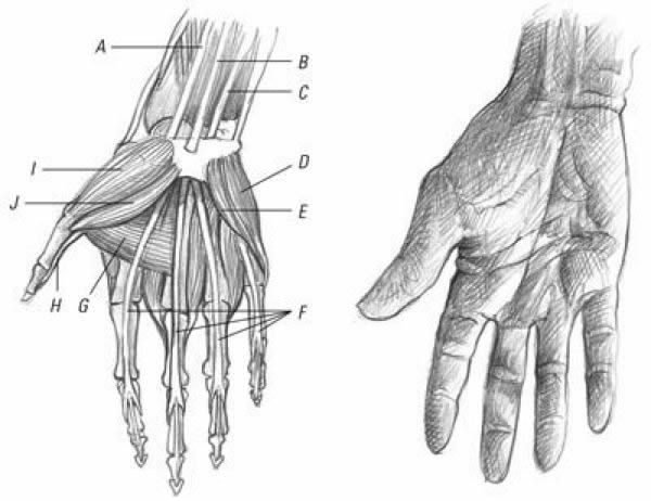 Learn How To Draw Realistic Hands Quarto Knows Blog